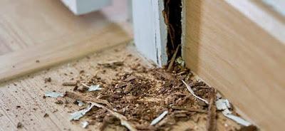 Powder post beetle damage vs Termite damage Pictures, Identification