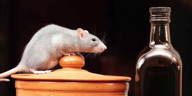 Ini Penyebab Penelitian di Laboratorium Sering Menggunakan Tikus, naviri.org, Naviri Magazine, naviri