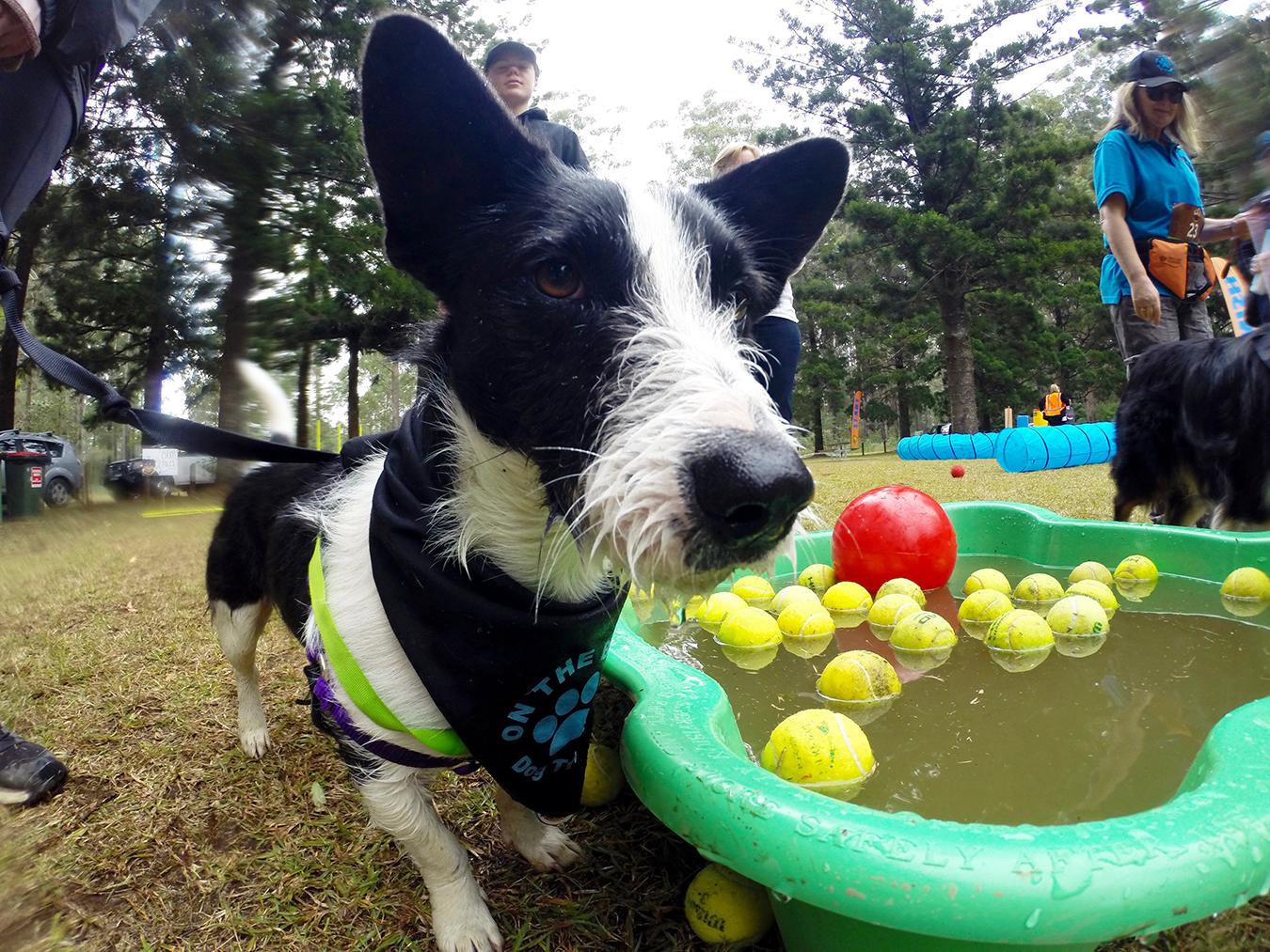 Dirty Dog Tail Run 2018 August 19 Australian Dog Lover