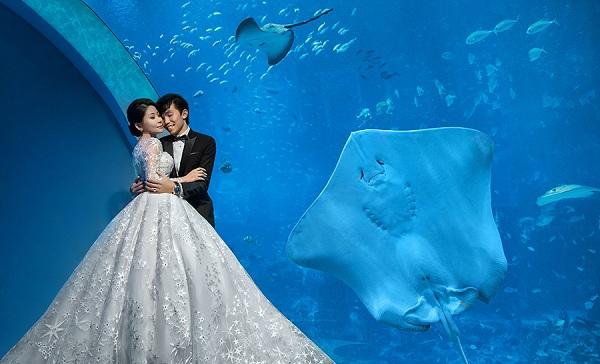 S.E.A Aquarium Nơi lý tưởng để sở hữu bộ ảnh cưới