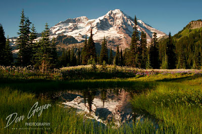 Mount Rainier reflected in a tarn in Indian Henry's Hunting Ground in Mount Rainier National Park, Cascade Range, Washington, USA.
