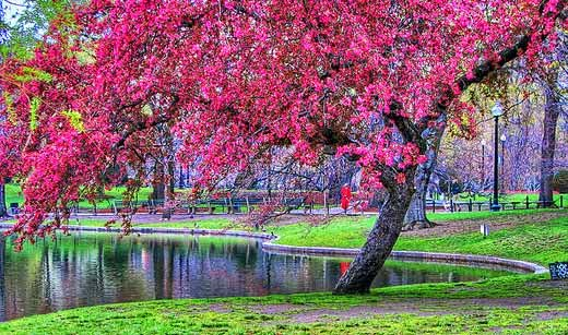 Boston Common and Boston Public Garden