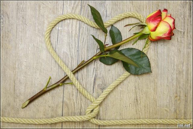 ảnh cành hoa hồng trong sợi dây hình trái tim