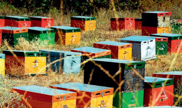 Το βιβλίο της ημέρας: Εμπειρίες ενός μελισσοκόμου για αρχάριους μελισσοκόμους από τις εκδόσεις Σταμούλη
