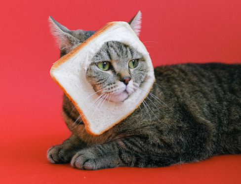 A cat. Poling its head through a big hole in a slice of bread.
