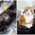 Kisah 20 ekor kucing yang selamat dari kematian