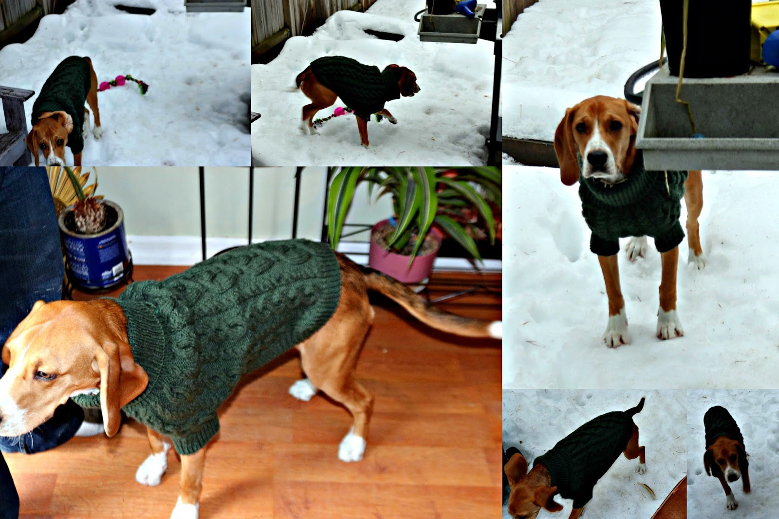 Grandparents & Grandchildren: Free Cable Knit Dog Sweater Pattern