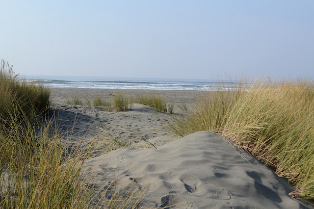 small dunes by the beach