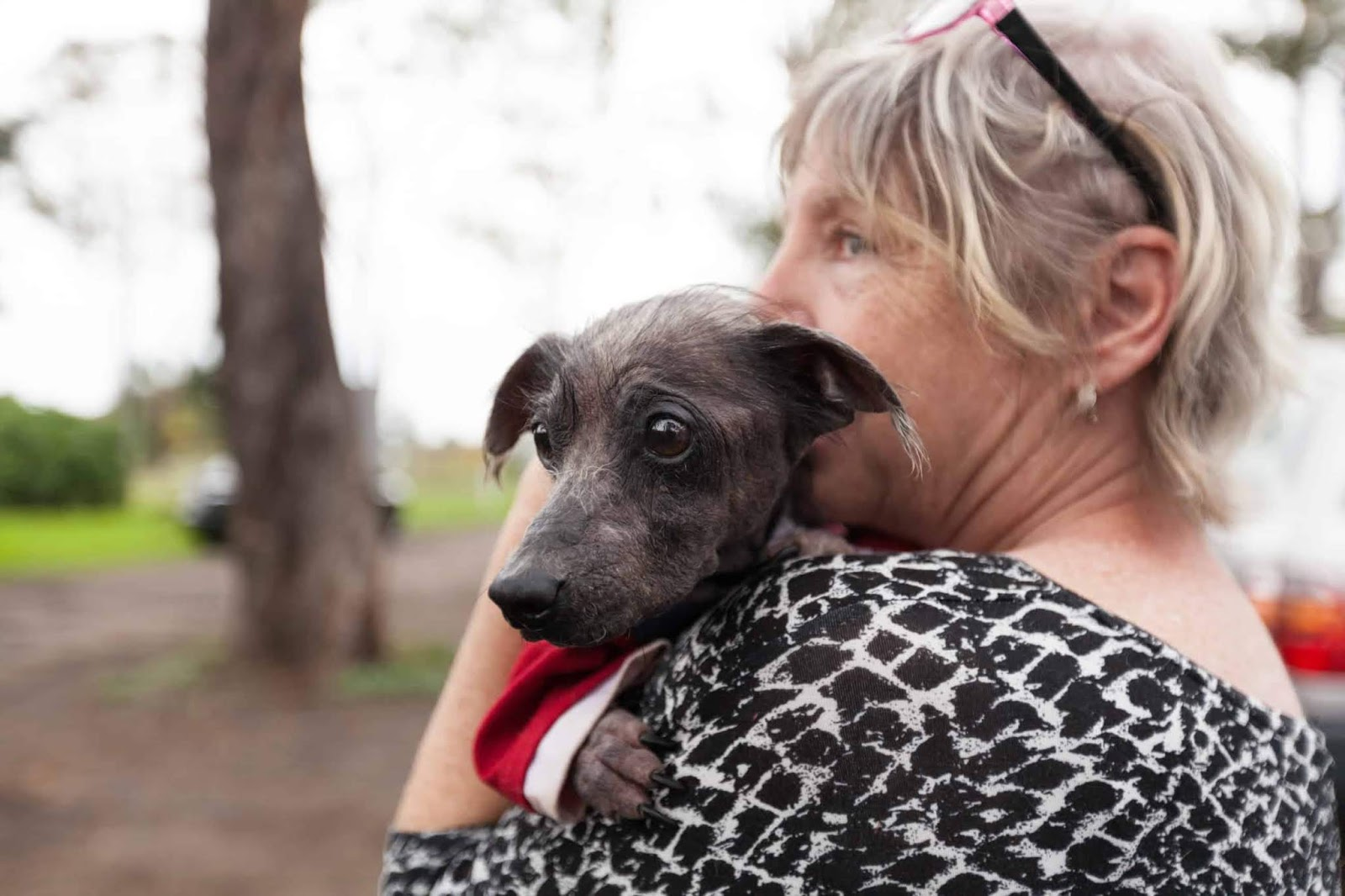 Older woman holding a senior scruffy rescue dog in her arms photo taken from the back