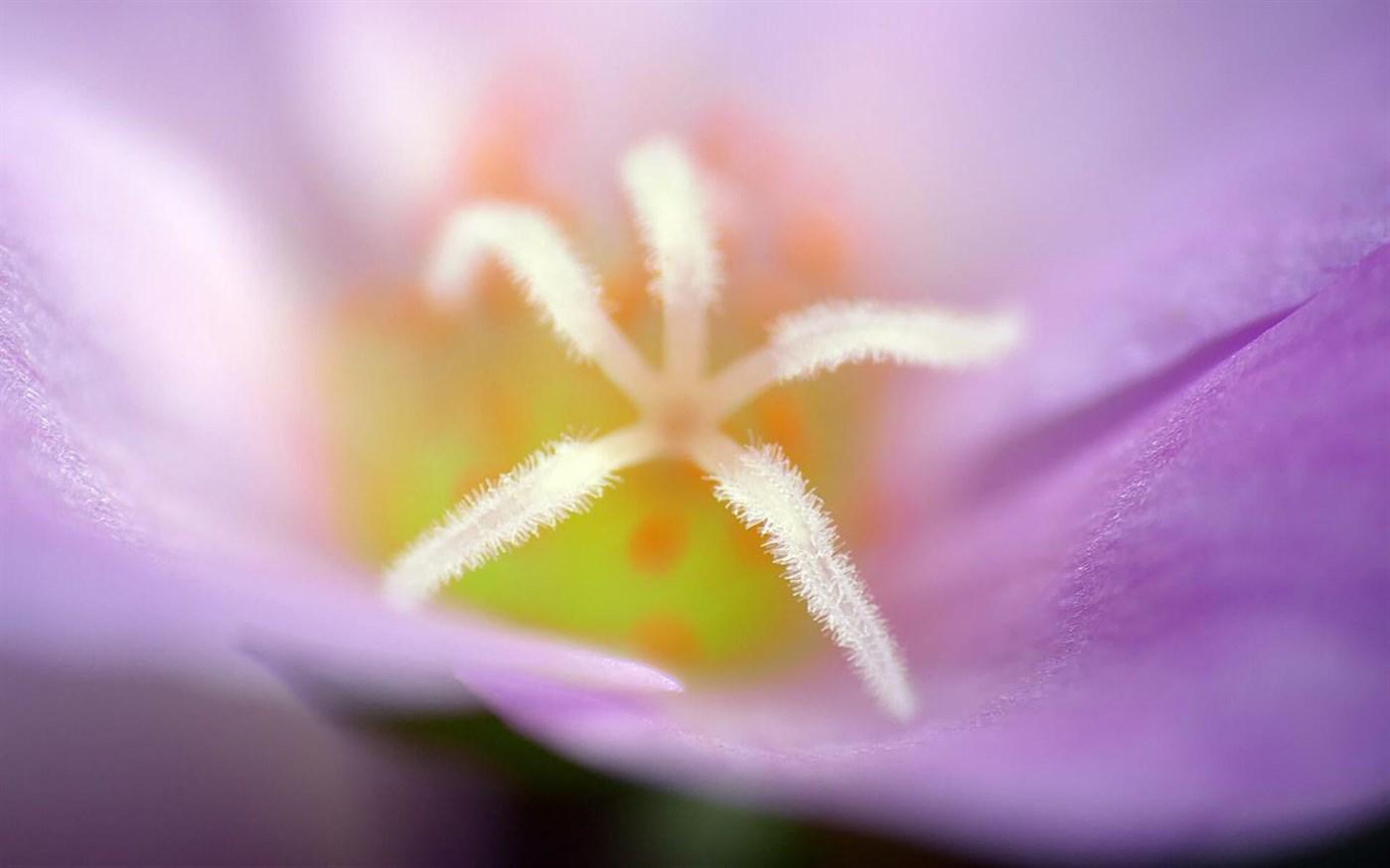 Download Flower Petals, Tema per Windows 10