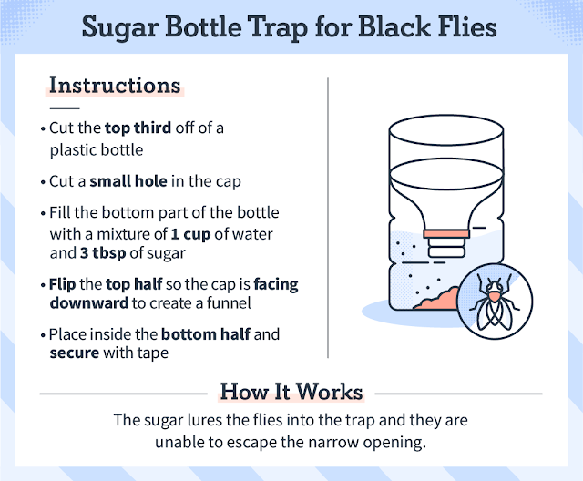Sugar Bottle Trap for Black Flies - DIY Natural Bug Remedy