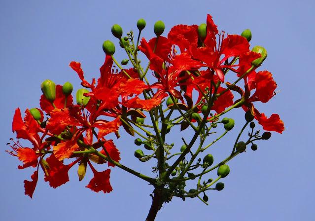 जड़ और फूल कक्षा 3 हिंदी कलरव | Primary Ka Master Guide UP Board Solutions for Class 3 Hindi Kalrav Chapter 15