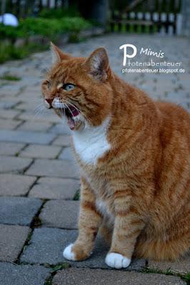 Katze Mimi beim Zähneputzen
