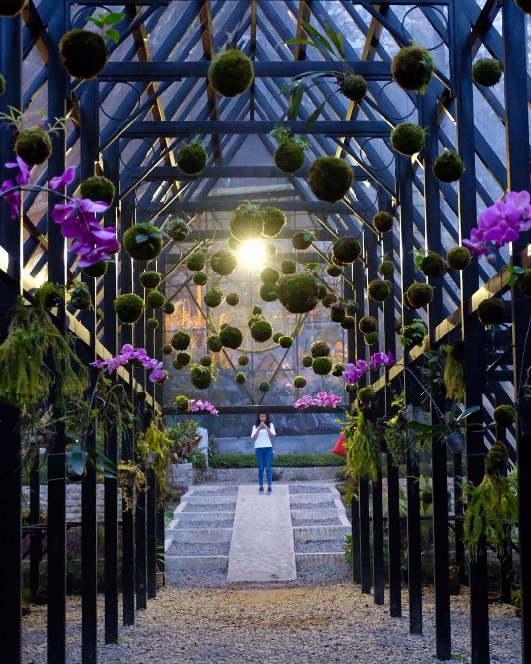 Taman Anggrek Orchid Forest Cikole