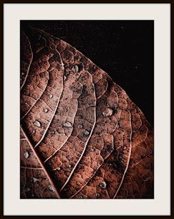 plakat jesień, jesienny plakat, plakat roślinny, plakat z kroplami, plakat z liścmi, plakat z liściem, plakat A3, plakat pionowy, plakat brązowy liść, plakat brązowe liście, plakat liść w kroplach, plakat krople deszczu