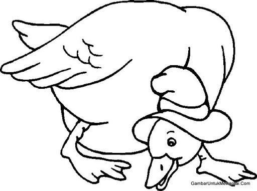menggambar ayam untuk anak paud