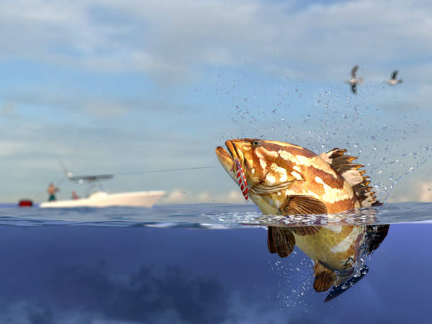 Grouper Fishing – On the Florida Gulf Coast
