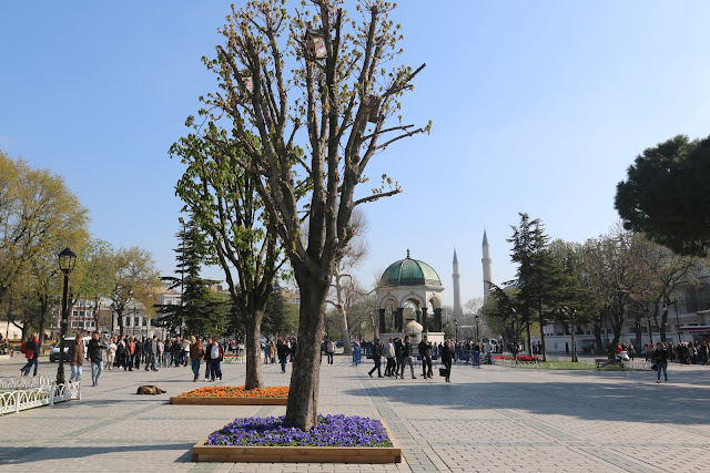Colourful Tulips are planted in Hippodrome and Sultanahmet at Istanbul, Turkey