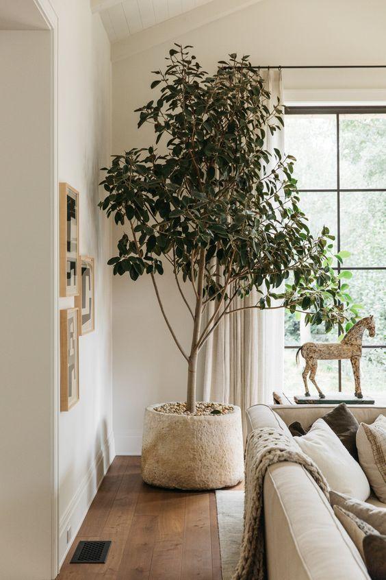 Διακοσμήστε το σπίτι σας με το απόλυτο φυτό για το 2021