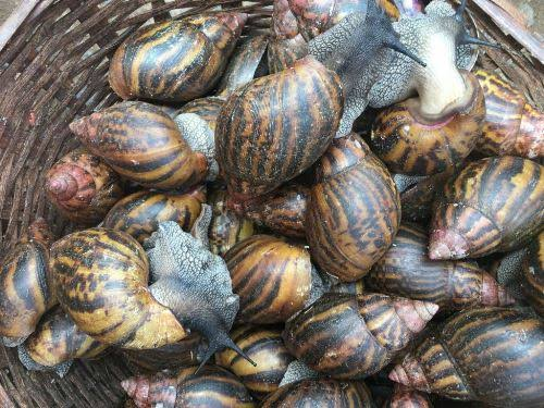Snail Farming In Nigeria | 6 steps to start | Earn up to N5million with low capital
