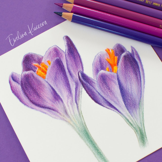 Spring Crocus Flowers - a step by step colored pencil tutorial