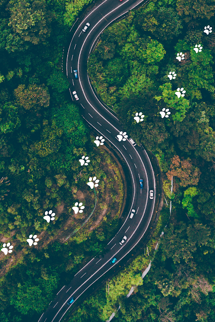 Cars Winding Highway Paw Prints