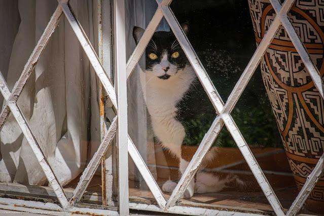 Gatinho curioso espiando na janela
