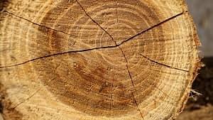 Di dalam sifat-sifat kasar kayu terdapat dua bagian lapisan kayu yakni kayu gubal (sapwood) dan kayu teras (heartwood). Penjelasan tentang kayu gubal dan kayu teras akan diuraikan sebagai berikut. Kayu gubal merupakan bagian dalam kayu di dalam pohon yang terdiri dari bagian silim yang masih hidup sehingga menjamin proses fisiologis yakni fungsi penyalur, penyimpan cadangan makanan, dan kekuatan mekanis dapat berjalan secara aktif (Pandit & Ramdan, 2002). Sunardi (1977) menjelaskan bahwa kayu teras merupakan bagian yang sudah mati di tengah batang kayu.