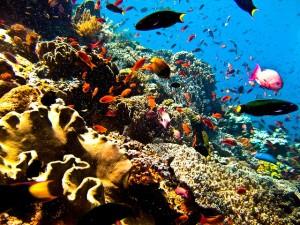 Paket Wisata Tour Bunaken - Manado