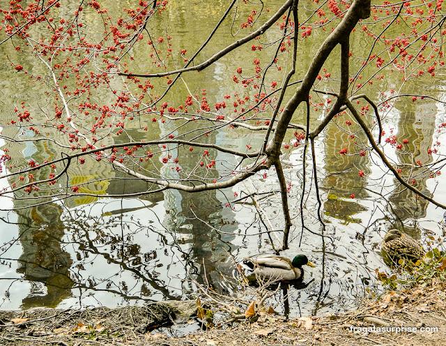 The Pond, a lagoa do Central Park, Nova York