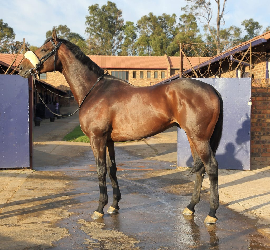 Crowd Pleaser - Horse Profile - Breeder: Normandy Stud - Sire: Captain Al - Dam: Happy Jean (USA) by Charismatic (USA)