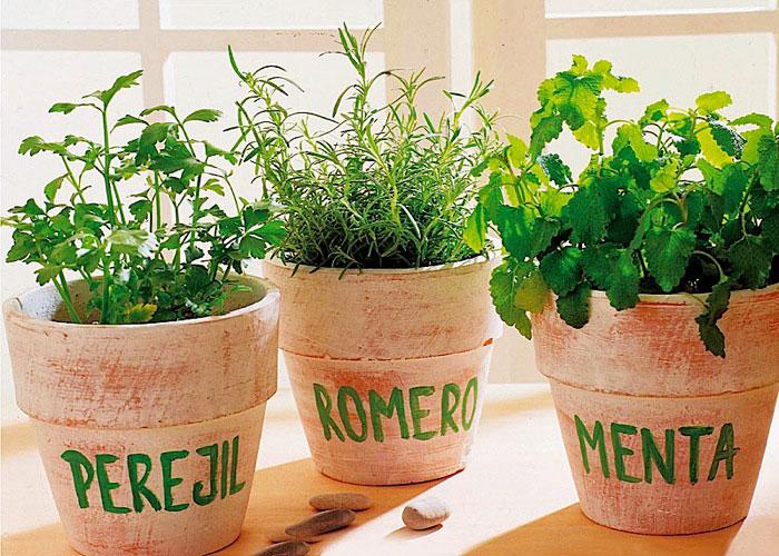 plantas aromaticas en macetas