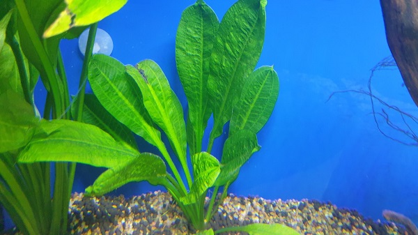 How to Grow & Sell Aquatic Plants
