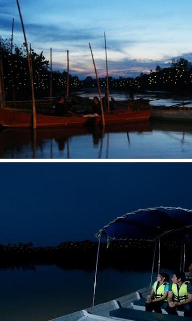 Kuala Selangor Fireflies api api paya bakau