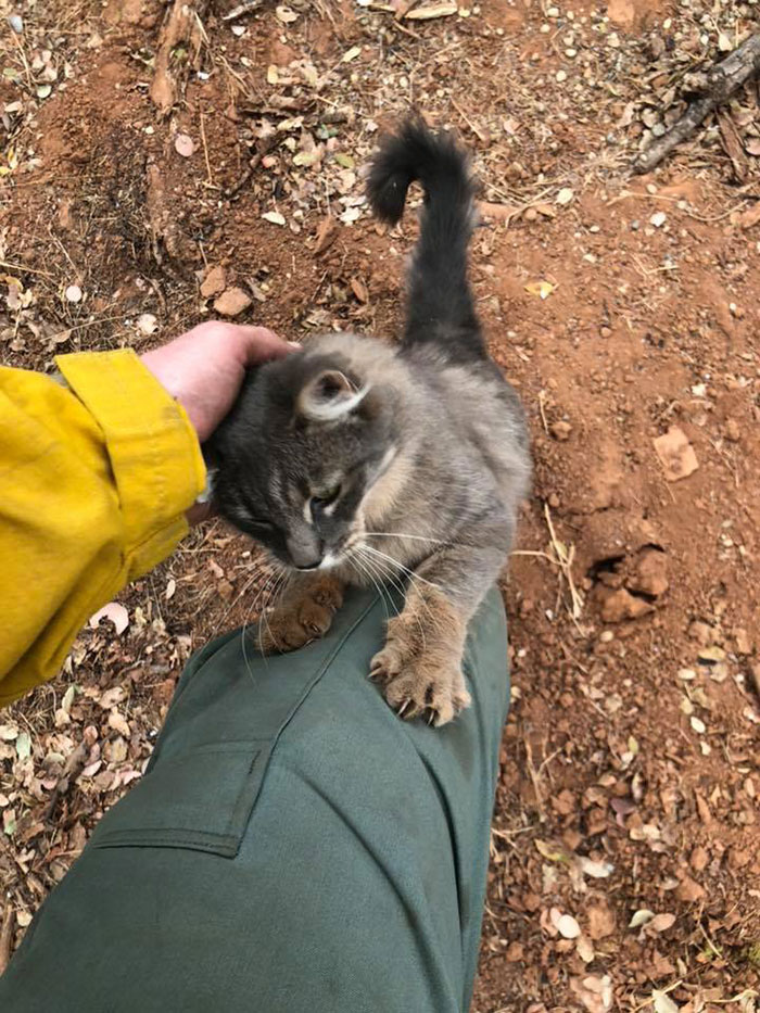 Firefighter Saves Cat From A Wildfire In California And She Is Forever Grateful