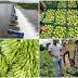 Investimentos do Governo do Estado na Barragem de Ponto Novo garantem novo ciclo produtivo para famílias agricultoras da região