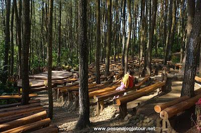 Paket Wisata Jogja ke Hutan Pinus Mangunan