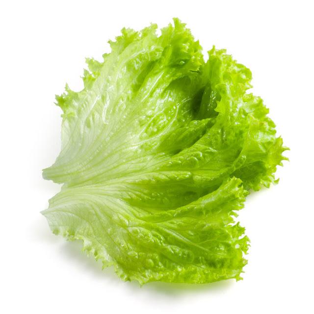 iceberg-versus-romaine-lettuce