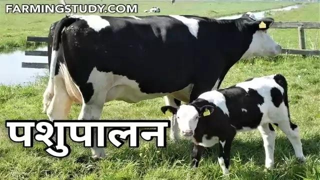 भारत में पशुपालन (animal husbandry in hindi) एवं डेयरी पशुओं की पूरी जानकारी हिंदी में, पशुपालन क्या है, पशुपालन की परिभाषा, राष्ट्रीय गोकुल मिशन,