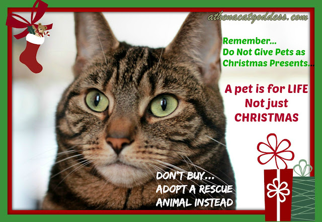 a christmas message from a rescue cat