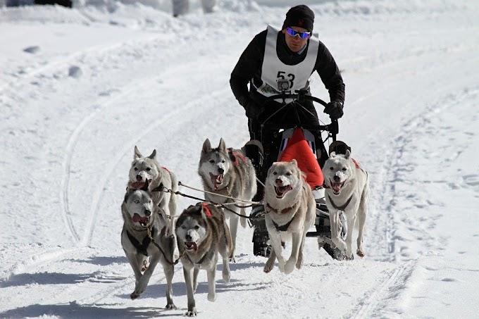 Viajar a los mejores campeonatos de perros del mundo
