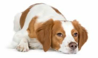are swollen or hot to the touch, overall decrease of mobility and lack of energy. Your pet dogs arthritis may also exhibit