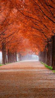 تحميل صور خلفية للخريف.