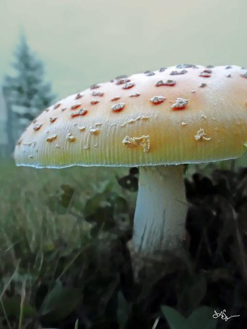 Fairy Mushroom Art