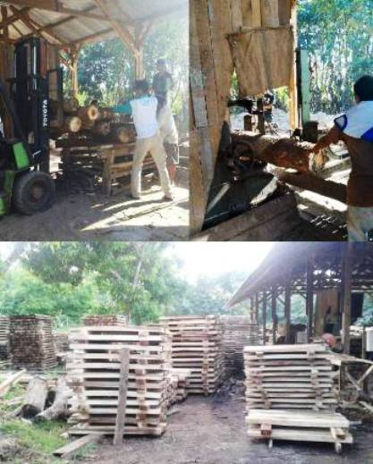 Pabrik Pengolahan Kayu Jabon