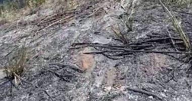 Idosa morre carbonizada no Agreste