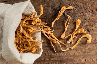 Dry cordyceps mushroom supplier