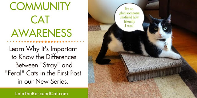 difference between strays and feral cats