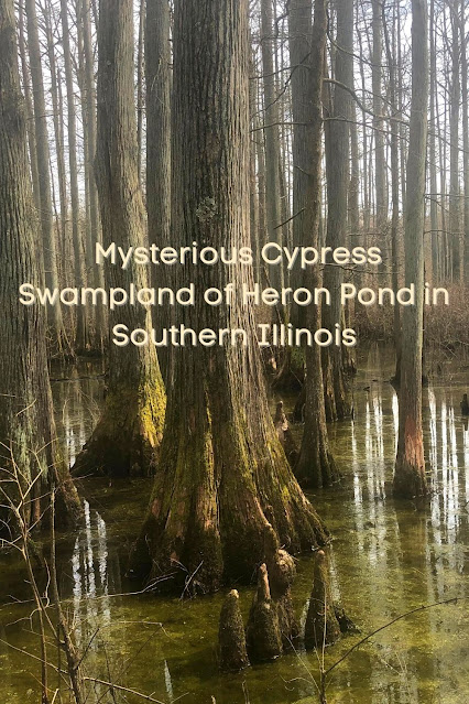 Mysterious Nature Intrigues at Heron Pond Inside Cache River State Natural Area in Southern Illinois