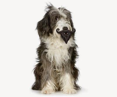 perro con barba de mosquetero